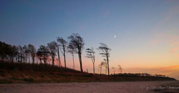 Der Küstenwald